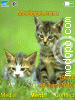 Download cats5 W715 Tema