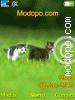 Download cat4 W715 Tema