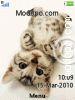 Download Cute Cats W715 Tema