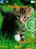 Download cat5 W715 Tema