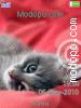 Download Pensive Kitten W715 Tema