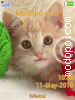 Download Suesse Katzenbabys W715 Tema